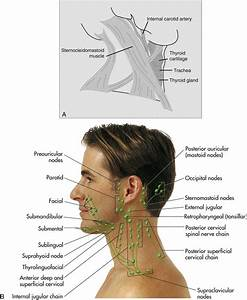15  Dental Hygiene Process Of Care