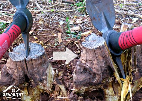 Easily Remove A Tree Stump By Hand