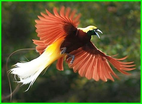 Pasalnya burung langka ini sangat dilindungi oleh. Hewan Langka di Indonesia Beserta Gambar dan Asalnya - Daftarhewan.com
