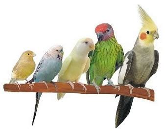 birds as pets pet birds weneedfun