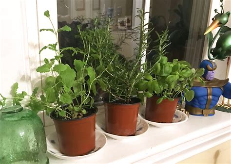 start  indoor herb garden  homestead