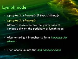 Lymph Node And Its Level  Certified Fixed Orthodontic