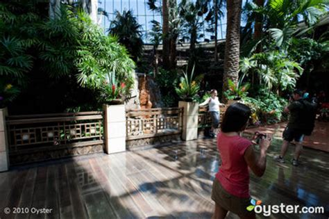 mirage secret garden lions dolphins and penguins oh my hotel animal