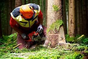 Was Kostet Baum Fällen : baum f llen kosten preise ~ Orissabook.com Haus und Dekorationen
