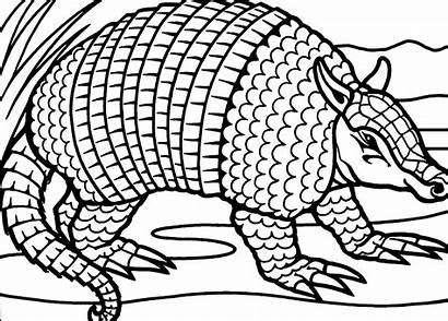 Armadillo Coloring Printable Pages