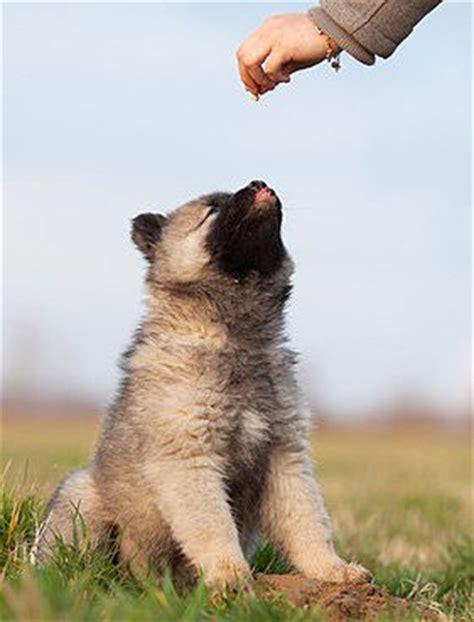 welpenerziehung welpen stubenrein tipps hunde fande