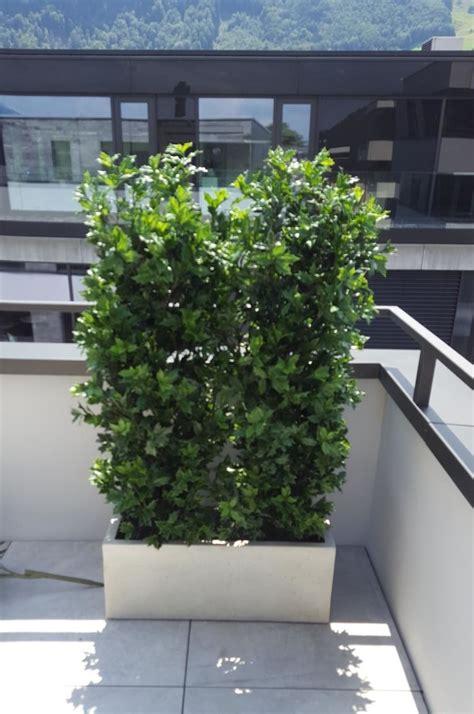 Rattan Sichtschutz Für Terrasse by Ilex Wetterfest Sichtschutz Premium Kunstpflanzen