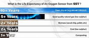 Extend Lifetime Of An Oxygen Sensor  5 Easy Steps  2019 Guide