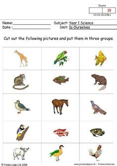 st grade animal unit images animal