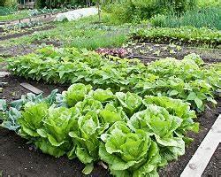 Mischkultur Im Garten : mischkultur im garten pflanzen nachbarschaft beipflanzung ~ Watch28wear.com Haus und Dekorationen