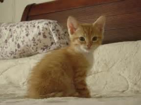 orange tabby cat 6 guest skater