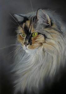 Peindre Au Pastel : longhaired cat pastel sec gravures de chat dessin pastel et dessin chat ~ Melissatoandfro.com Idées de Décoration
