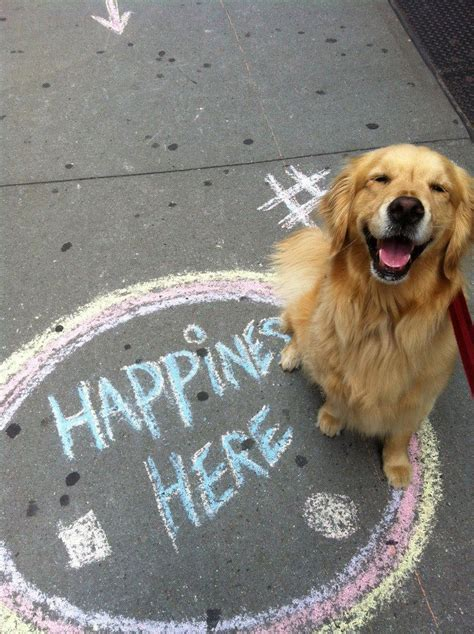 pure joy smiling golden retriever dog happiness
