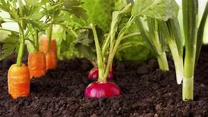 Gemüse Pflanzen Was Passt Zusammen : welche gem sesorten passen zusammen bl hendes sterreich ~ Lizthompson.info Haus und Dekorationen