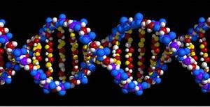 Genetics  U0026 Acne