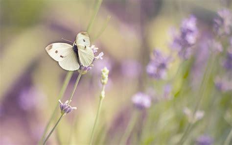Nature, Macro, Flowers, Butterfly Wallpapers Hd / Desktop