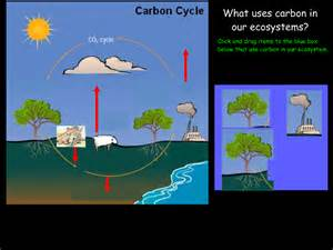 5th Grade Carbon Dioxide Cycle