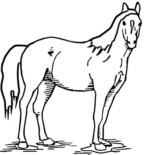 horse standing  pasture coloring page purple kitty