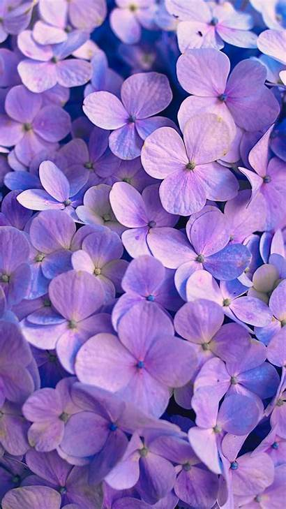 Hydrangea Petals Flowers Purple Iphone 6s Samsung