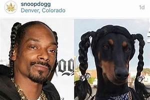 Snoop Dogg N My Dog (IG: @PeppertheDobie )