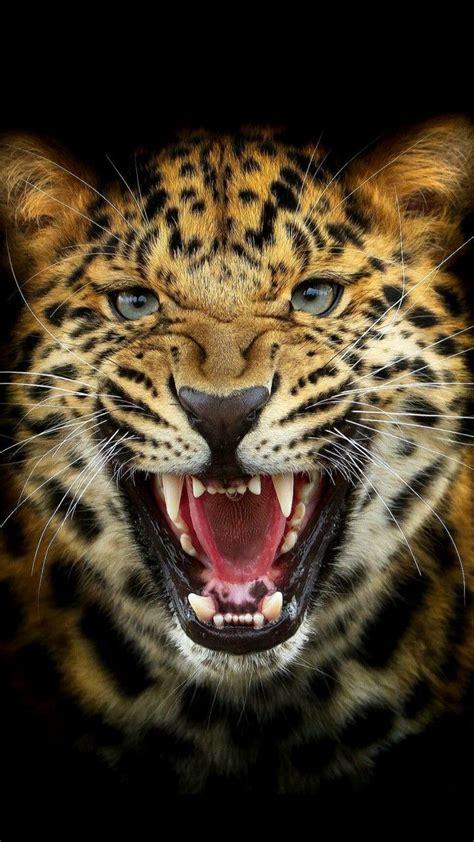 Tappezzeria Gatti Muggin Leopardi Chats Sauvages Felin Sauvage E