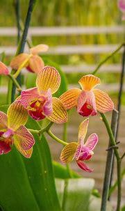 Pin by Entre Orquídeas on Orquideas   Plants