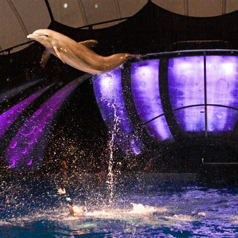 dolphin  georgia aquarium
