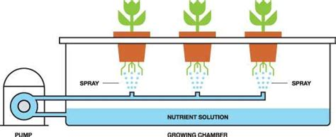 What Need To Do For Building Weed Hydroponic Systems?