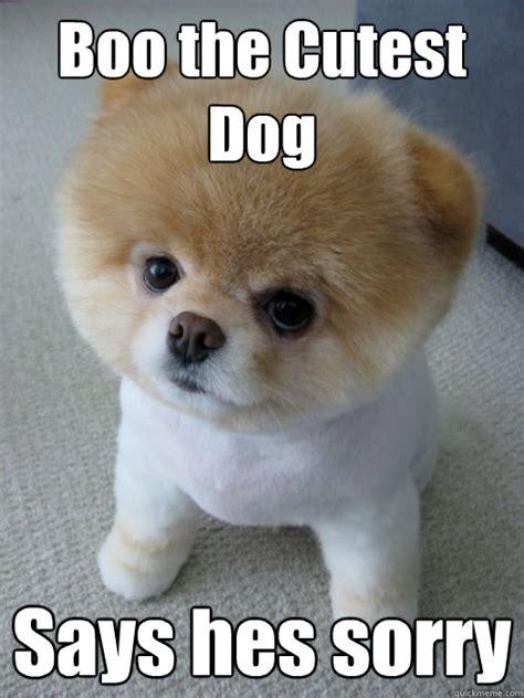 Boo Meme - boo the cutest dog says hes sorry boon my dawg quickmeme