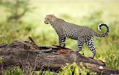 Wildlife Wallpapers