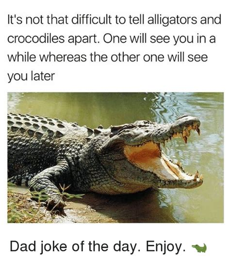Crocodile Meme - it s not that difficult to tell alligators and crocodiles apart one will see you in a while