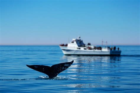 A Guide To Whale Watching In Cape Town