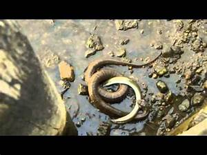 Download Sea Snakes And Electric Eels Fight Youtube Video ...