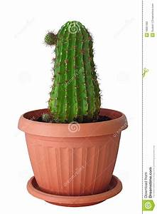 Pot A Cactus : indoor cactus in a brown pot stock photo image of green home 18897360 ~ Farleysfitness.com Idées de Décoration