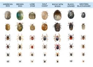 Can Carpet Beetles Bite Humans by Dangerous Dogs List Usa Dog Breeds Picture