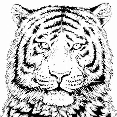 Coloring Wwf Tiger Pages Animal Wildlife Fund