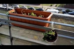 Tulpenzwiebeln Im Topf Pflanzen : video erdbeeren im topf auf dem balkon pflanzen ~ Lizthompson.info Haus und Dekorationen