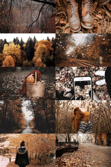 skogsra autumn aesthetic autumn photography beautiful fall