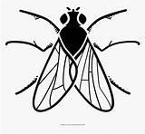 Mosca Colorear Dibujar Fly Coloring Kindpng sketch template