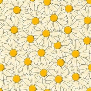 daisy flowers background   Tumblr