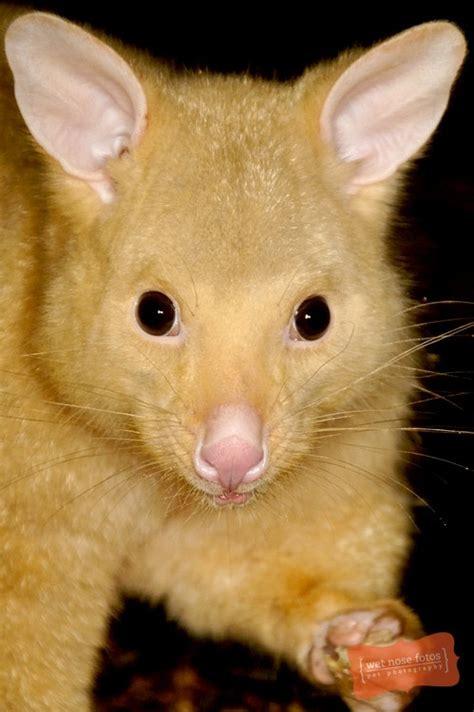 images  life small mammals  pinterest