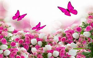 Flower Bouquet White And Pink Roses And Flying Butterflies
