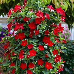 Welche Blumen Blühen Im Winter Draußen : h ngepflanzen f r drau en frische deko ideen mit pflanzen f r drinnen und drau en h ~ Watch28wear.com Haus und Dekorationen