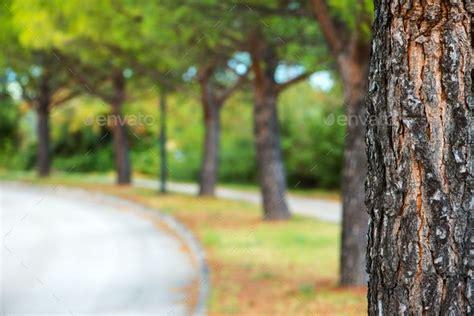 park tree  defocused blur background blurred