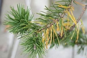 Zitruspflanzen Gelbe Blätter : gartenfragen ~ Orissabook.com Haus und Dekorationen