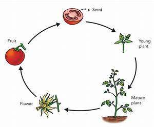 All About Gardening  Understanding The Cycle Of Nature