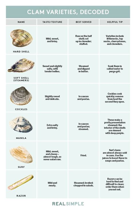 types of clams here s every type of clam in one simple chart simple real simple and clams