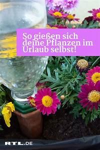 Pflanzen Bewässern Urlaub : blumen gie en w hrend des urlaubs so bew ssern sich ihre pflanzen selbst pflanzen urlaub und ~ Watch28wear.com Haus und Dekorationen