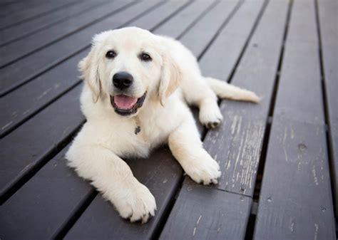 smartest dogs 5 smartest dog breeds chosen by veterinary professionals
