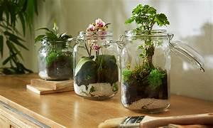 Pflanzen Für Terrarium : pflanzen terrarium selber machen m max blog ~ Orissabook.com Haus und Dekorationen